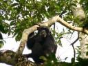 simpanz1.JPG